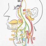 Multidisciplinaire behandeling van kokhalzen